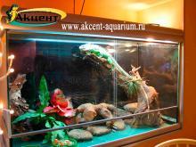 Акцент-аквариум. Террариум с игуаной